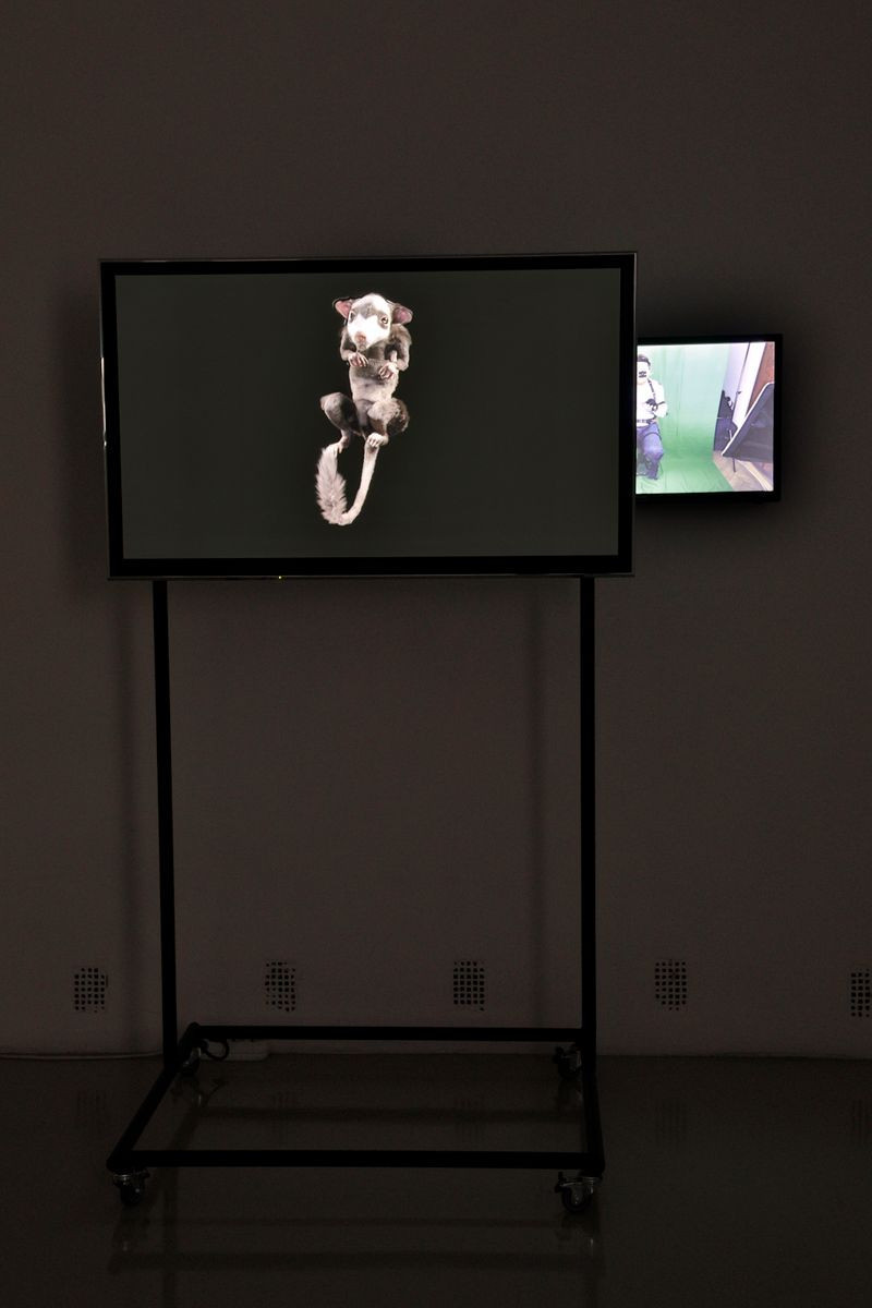 András Cséfalvay: Purgatorius, 2018. Two-channel video installation, 11'07"